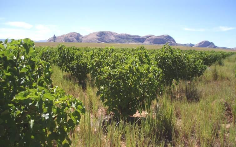 JatroSolutions' Jatropha breeding station and testing site in Madagascar