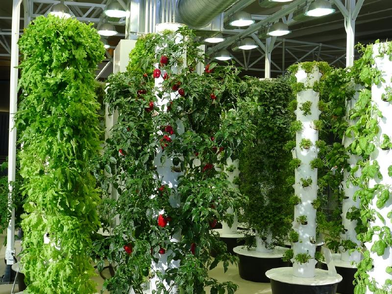 Chicago O'Hare Airport vertical farm