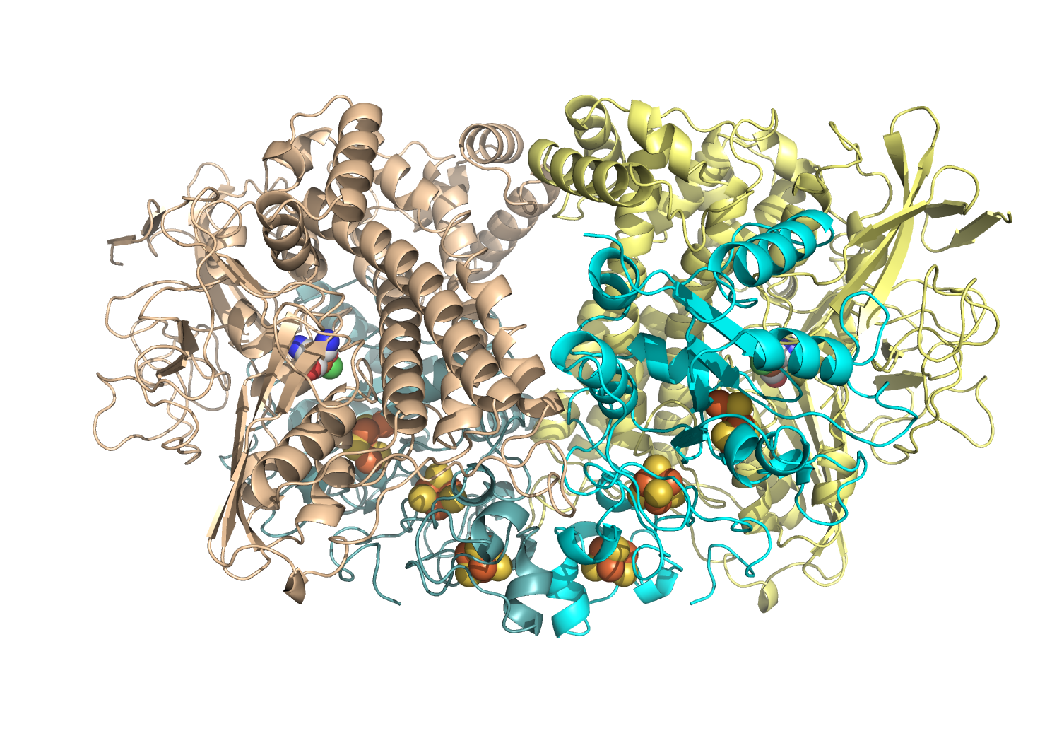 Hydrogenase is made of four chains of protein folded up and holding atoms of nickel and iron buried inside to form a site where hydrogen gas can be split
