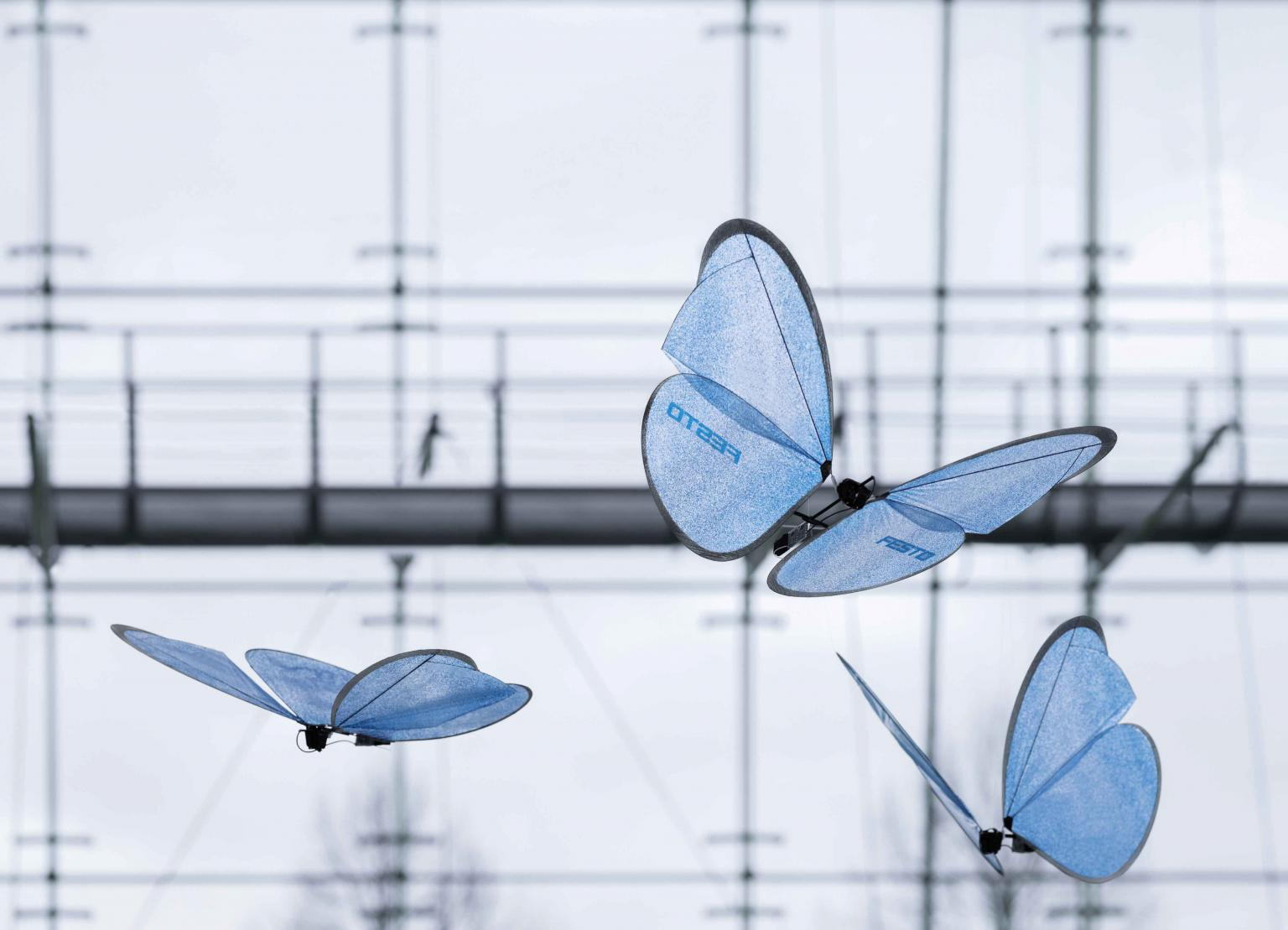 To prevent the ultra-lightweight eMotionButterflies from colliding, they are co-ordinated by an indoor GPS