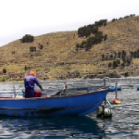AI and the IoT to aid Peruvian fish farmers